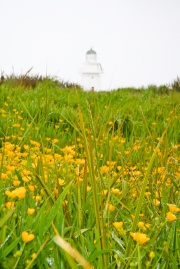Curio Bay Lighthouse, South Island