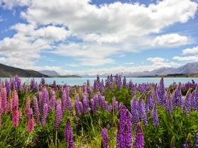 Lake Pukaki, Mt Cook (Aoraki) National Park, South Island
