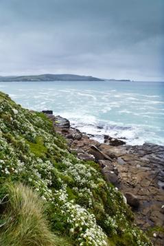 Porpoise Bay, South Island