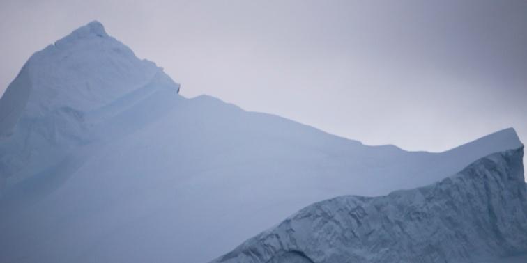 Cuverville Island, Antarctica