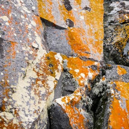 Half Moon Island, South Shetland Islands, Antarctic Peninsula