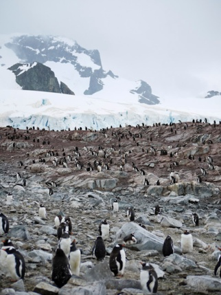 Half Moon Island, South Shetland Islands, Antarctic Peninsula