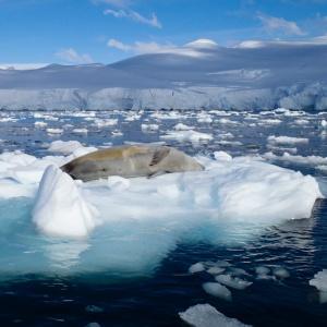 Leopard Seal, Dallman Bay, Antarctica