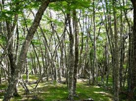 Tierra del Fuego National Park, Argentinian Patagonia
