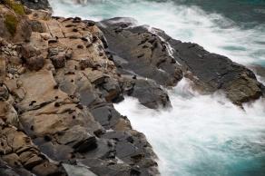 New Zealand Fur Seals, Cape du Couedic, Flinders Chase National Park, Kangaroo Island