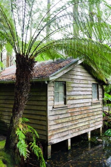 Alfred Nicholas Memorial Gardens, Dandenong Ranges, Victoria