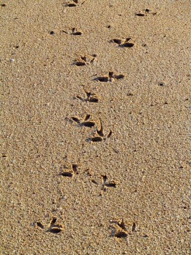Footprints in the Sand, Barrow Island