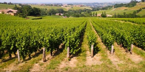 Beaujolais Wine Region, Lyon, France