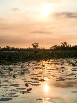 Mary River Billabong, Mary River National Park, Northern Territory