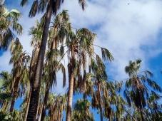 Palms at Mataranka Thermal Springs, Northern Territory