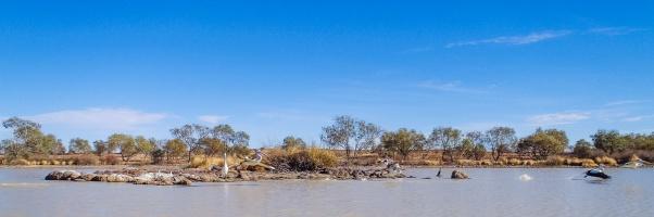 Pelicans, Diamantina River, Birdsville, Queensland