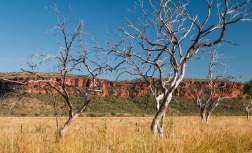 Stokes Ranges form the backdrop to the Victoria River Roadhouse, Gregory National Park, Northern Territory
