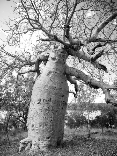 Gregory's Tree, Gregory National Park, Northern Territory