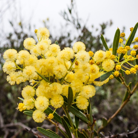 Wildflowers, Fitzgerald River National Park