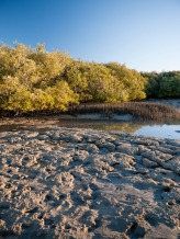 Mangrove Bay, Ningaloo Marine Park, Western Australia