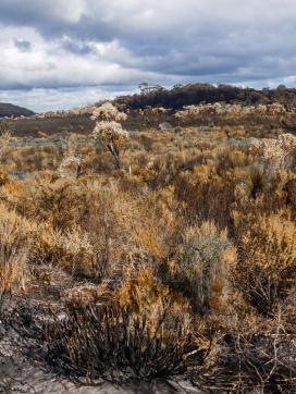 Vegetation after a fire through D'Entrecasteaux National Park