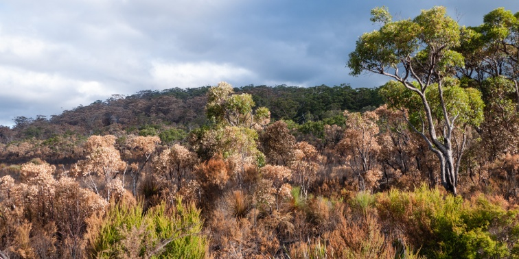 Vegetation after a fire through D'Entrecasteaux National Park