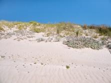 Dune vegetation at Jasper Beach, D'Entrecasteaux National Park