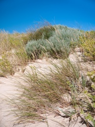 Dune vegetation at Jasper Beach, D'Entrecasteaux National Park