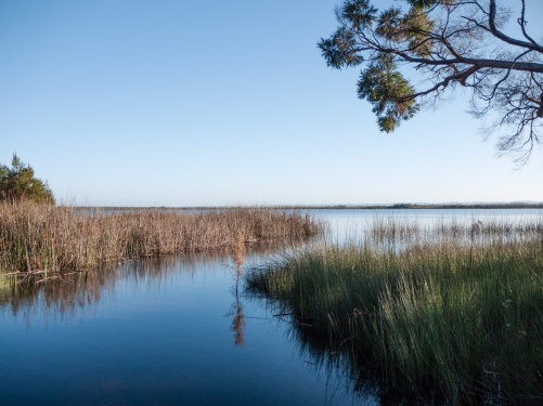 Fringing vegetation around Lake Jasper, D'Entrecasteaux National Park