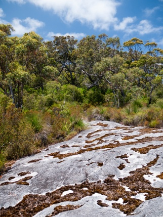 Mount Clare, Walpole-Nornalup National Park