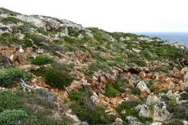 Hardy coastal vegetation at Point D'Entrecasteaux, D'Entrecasteaux National Park