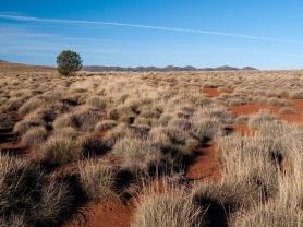 Appealinna Ruins, Flinders Ranges, South Australia