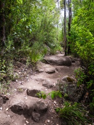 Walk Trail up to Castle Rock, Porongurup National Park