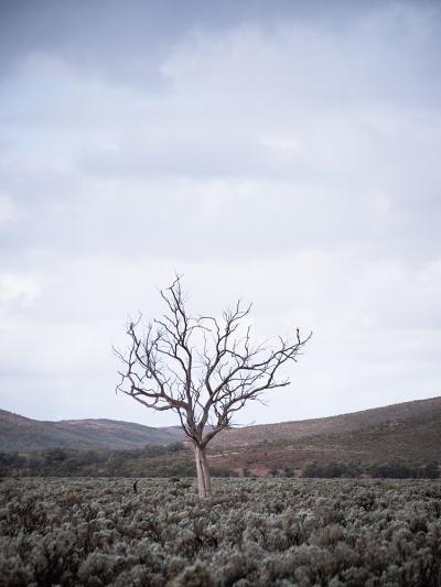 Gawler Ranges National Park, South Australia