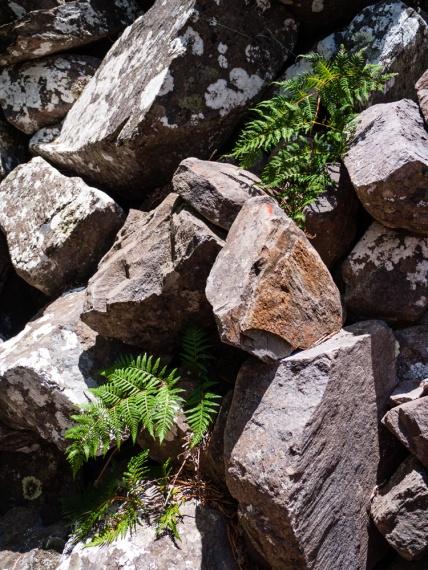 Plants growing between Rocks, Mount Toolbrunup, Stirling Range National Park