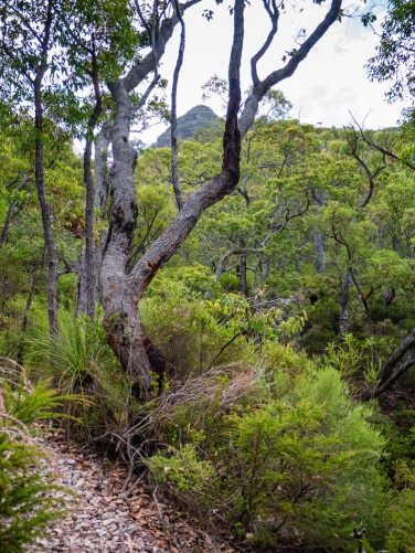 Walk Trail with a view of Mount Toolbrunup Summit in the Distance, Stirling Range National Park