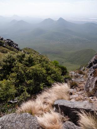 Grasses Growing at Altitude, Mount Toolbrunup, Stirling Range National Park