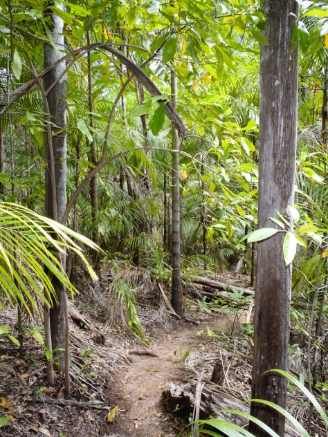 Gubara Pool Walk, Kakadu National Park, Northern Territory