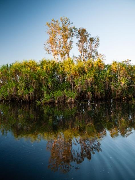 Yellow Water Billabong, Kakadu National Park, Northern Territory