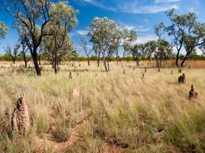 Termite Mounds, Limmen National Park, Northern Territory
