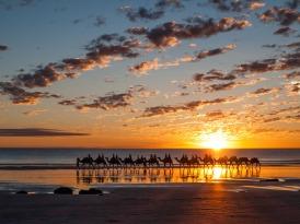 Camel Train, Cable Beach, Broome, Western Australia