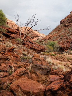 Drapers Gorge, Kennedy Ranges National Park, Western Australia