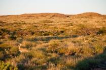 Birdlife, Cape Range National Park, Western Australia