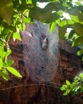 Spider Web in Emma Gorge, El Questro Station, Kimberleys, Western Australia