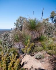 Boonerring Hill, Darling Range, Western Australia