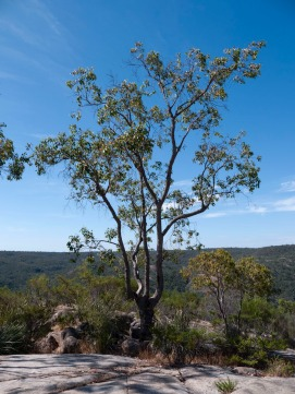 View from Bald Hill, Avon Valley National Park, Western Australia