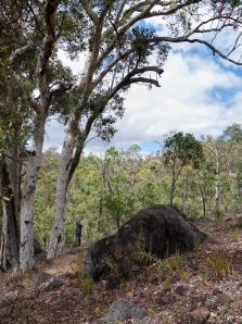 Bush near Drummonds campsite, Avon Valley National Park, Western Australia