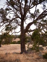 Farmland near Wandering, Western Australia