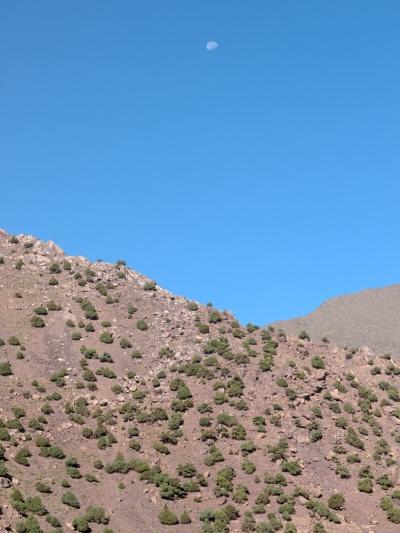 Scrub vegetation in Toubkal National Park, Morocco