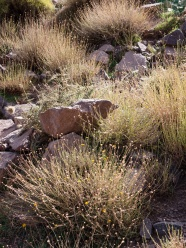 Sunlight highlights the blades on the grasses in Toubkal National Park, Morocco
