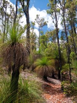 Island Pool Walk Trail, Lane Poole Reserve