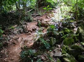 The track to the falls, Killen Falls Nature Reserve