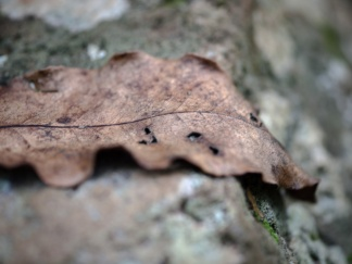 Fallen leaf, Killen Falls Nature Reserve
