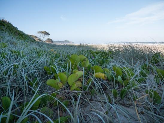 Coastal vegetation, Arakwal National Park