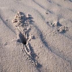 Crab holes in the sand at Tallows Beach, Arakwal National Park